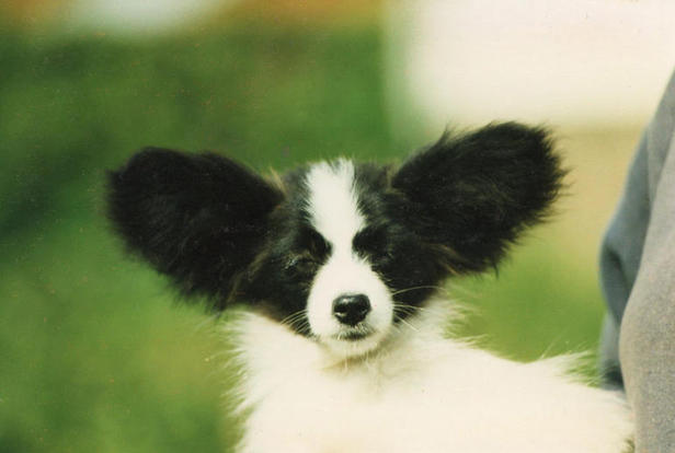 Andrew as a puppy