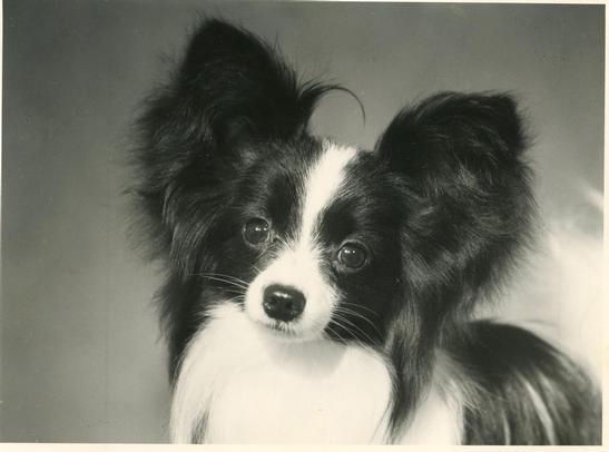 Eddie as a puppy