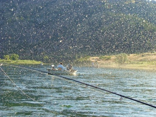 Fly fishing montana 39 s missouri river hatches for Hatch fly fishing