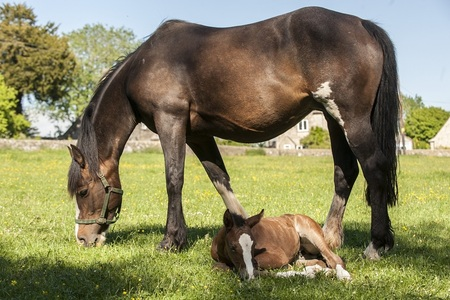 Dash and 2013 foal