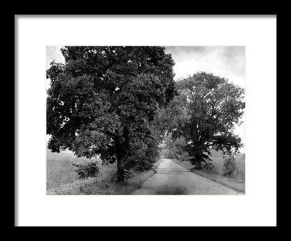 """""""Summer Trees"""""""