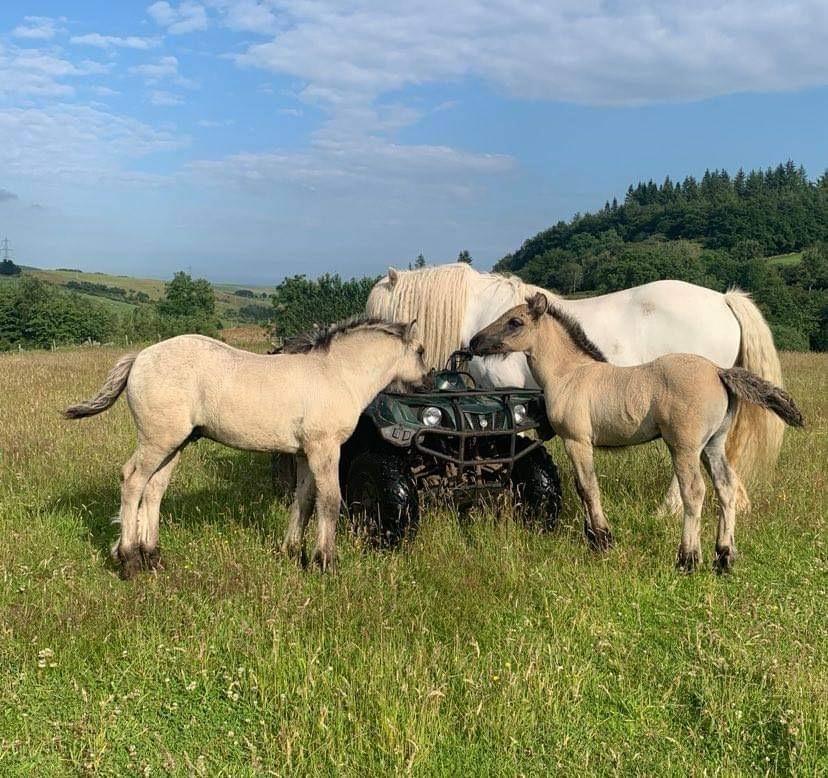 Foals 2021