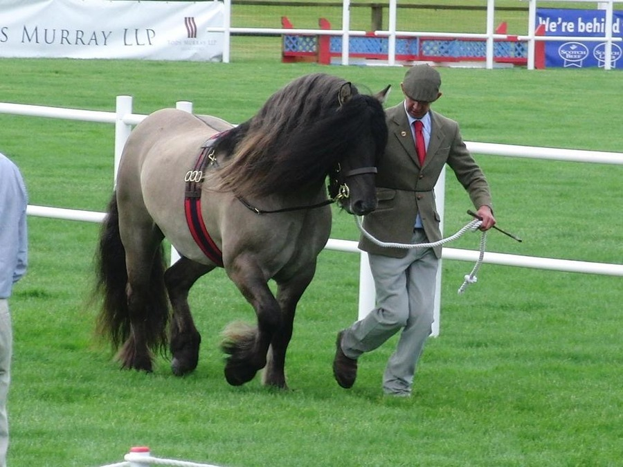 Rannoch at the Royal Highland Show . Male Champion and Reserve Overall.