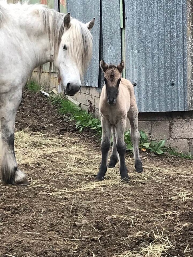 New filly foal.
