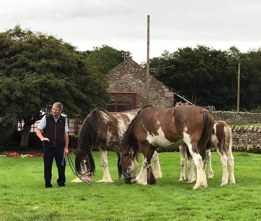 Ronnie & Jis Clydesdales.