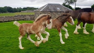 More foals