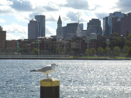 View of city from the Harbour, Boston
