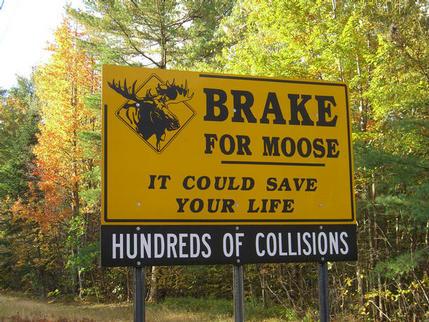 Moose warning sign on Route 16, Gorham