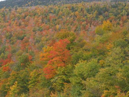 Autumn Colours / Fall Colors