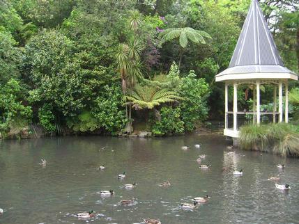 Duck Pond at the Botanic Gardens, Wellington