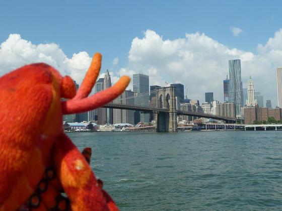 Taking a look at the Brooklyn Bridge