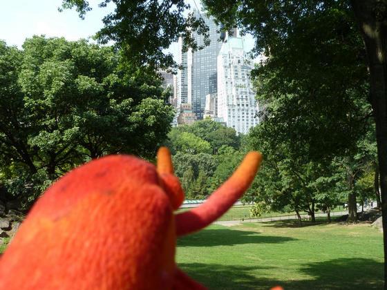 Having a walk around Central Park in New York