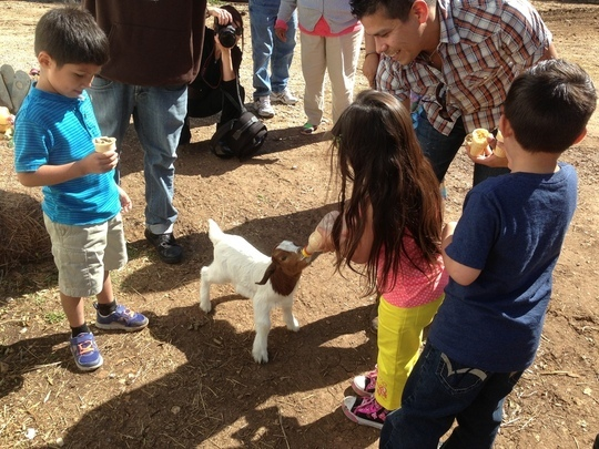 Pony Parties And Petting Zoos