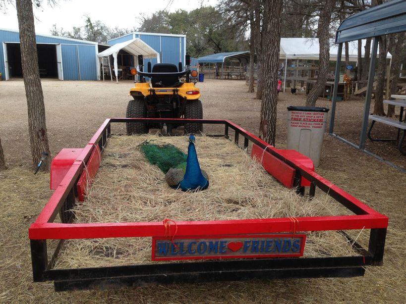 Fiesta Farm Ponies And Parties