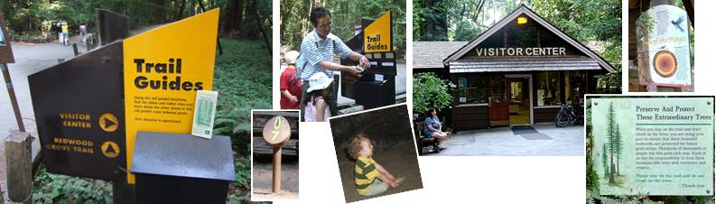 Henry Cowell State Park - interpretation