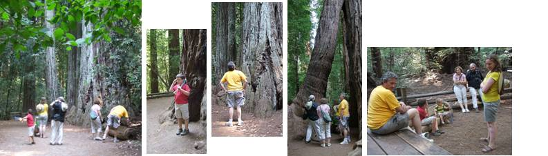 Redwoods forest family composite