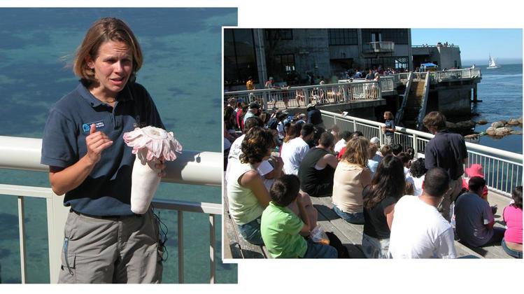 Monterey Bay Aquarium interpreter at work