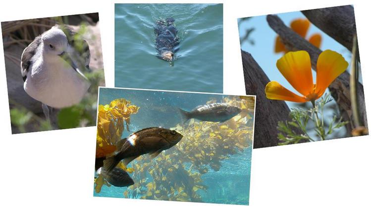 Inside the Monterey Bay Aquarium