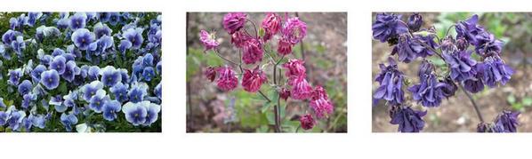 Trentham Gardens flowers