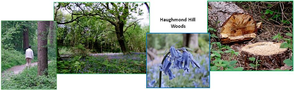 Haughmond Hill woods