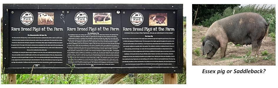 Jimmy's Farm interpretation