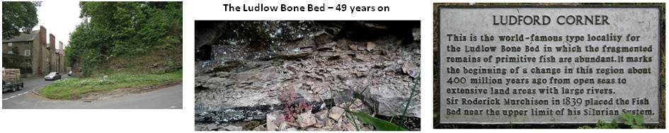 The Ludlow Bone Bed