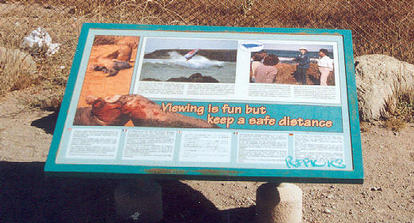 Elephant seals - interpretive panel