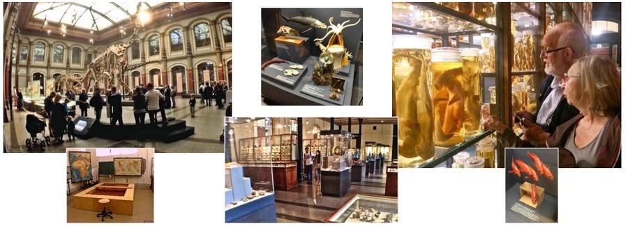 Berlin - Natural History Museum