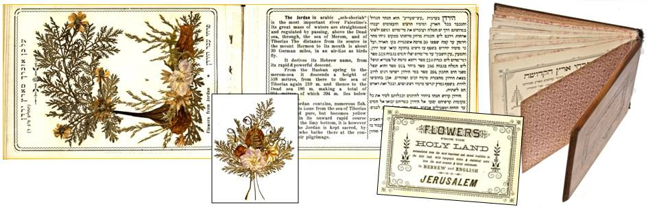 Flowers of the Holy Land book