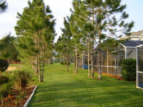 """View behind """"Pine View Villa"""""""