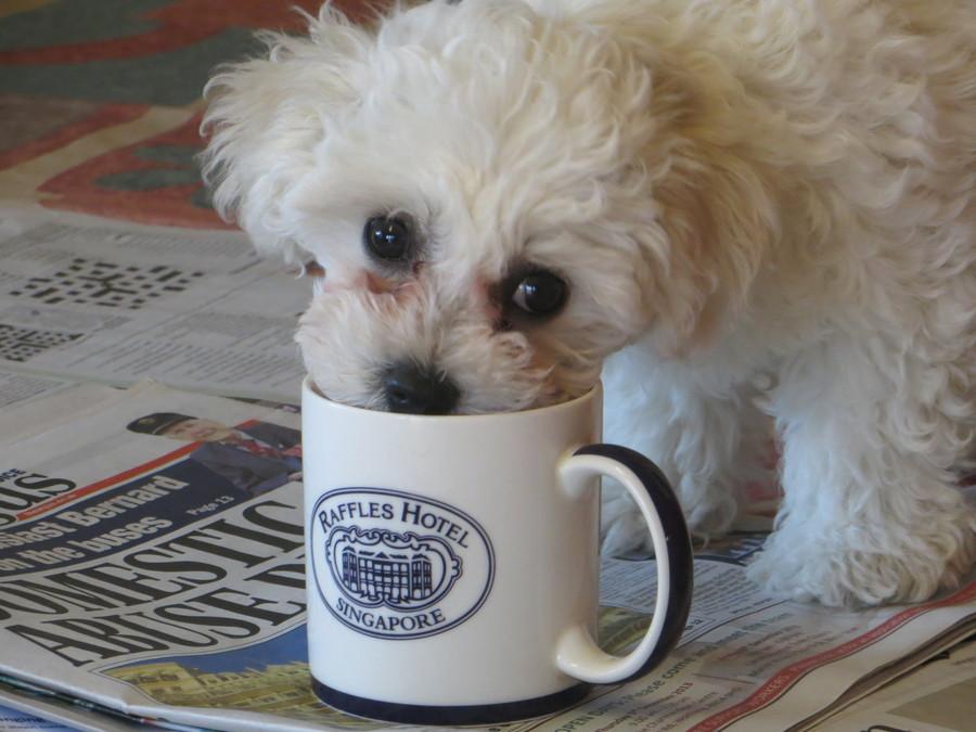 Freddie discovers he likes tea!