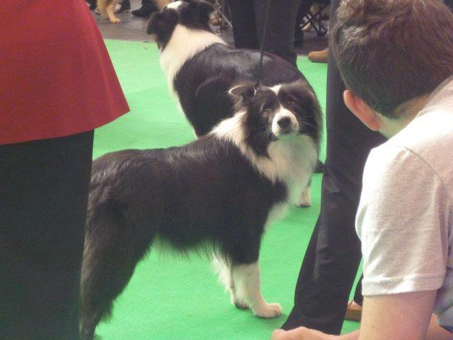 at Crufts 2012
