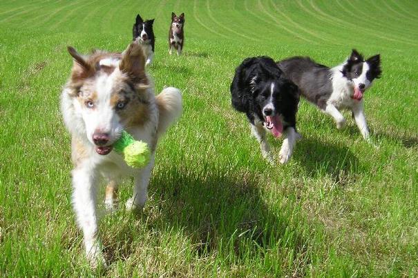 Mac, Molly, Spud, Kes & Lexie - summer 2004