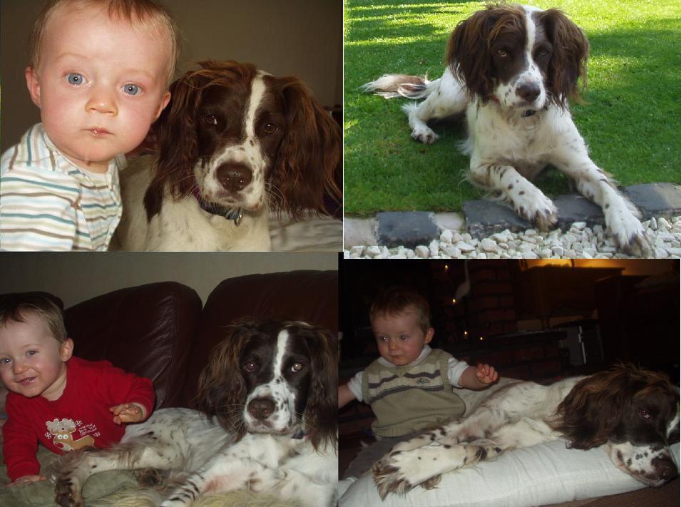 Oskar - family dog