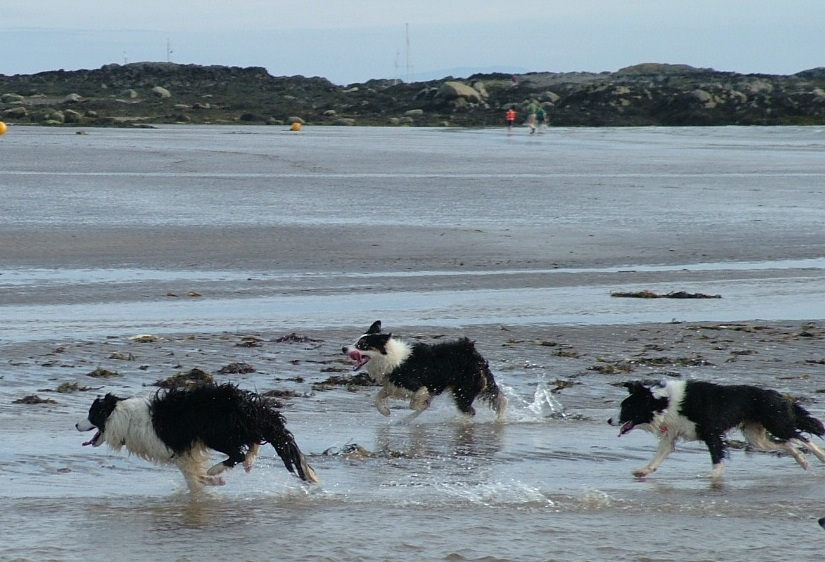 Lloyd, Dottie and Mercy racing on the beach at Anglesey