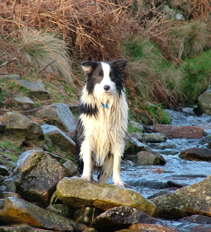 A very soggy Miss!!