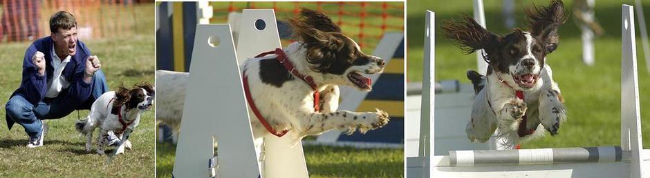 Oskar - Flyball Dog