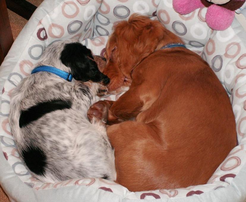 Rio and Roxy again...