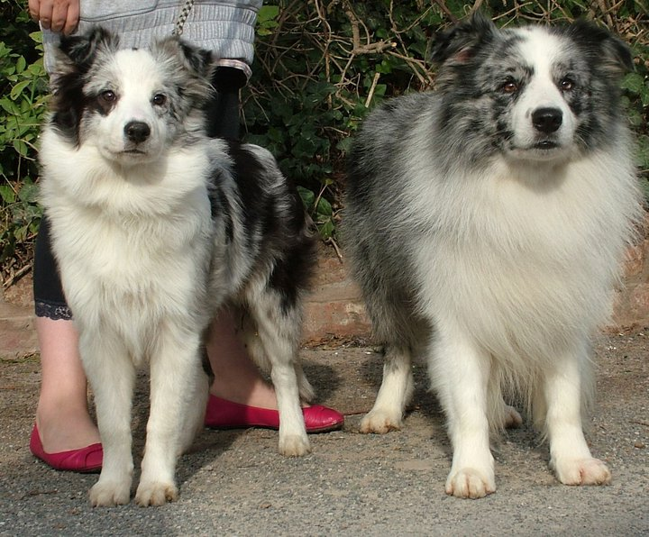 Spark with his daughter Flurrie - Bryning Blue Sapphire at 6 months old (dam - Locheil Mercy me at Bryning)