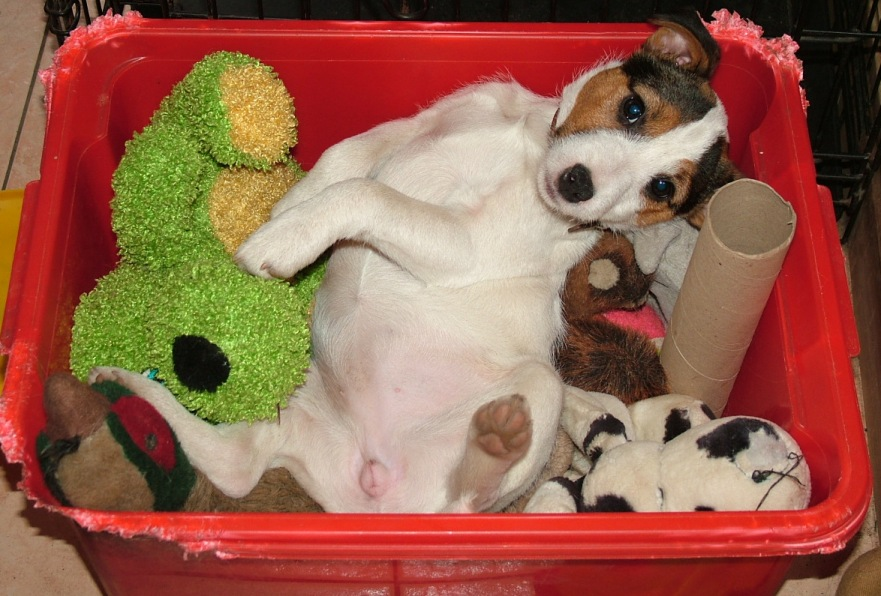 sleeping in the toy box - 18 weeks old