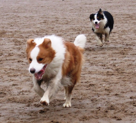 Sunny & Dottie on the beach at St Annes
