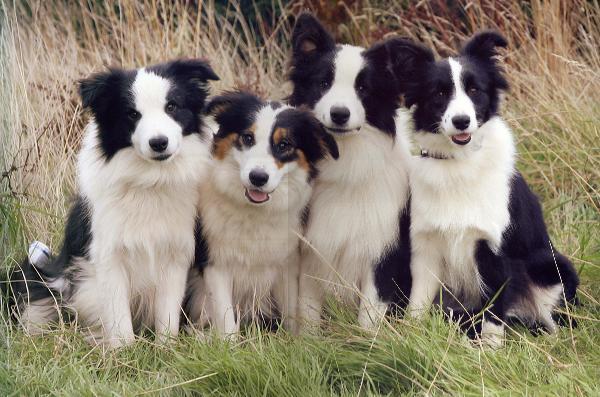 The 'Locheils' at Bryning (Lloyd, Dottie, Ethan, Mercy) photo copyright Nick Ridley Aug 06