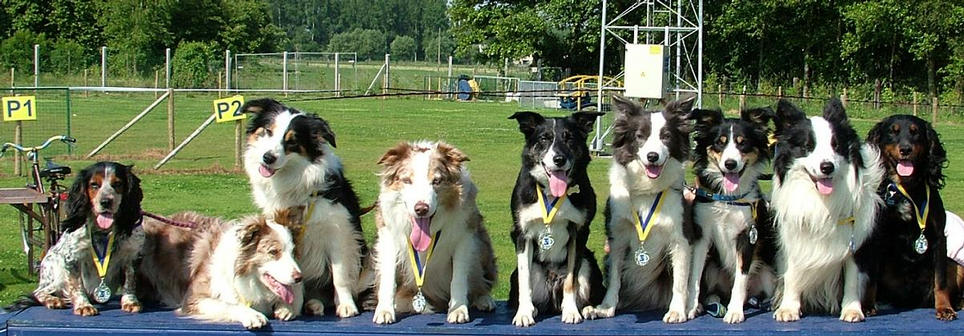 all the dogs that ran at EFC 2009 in Beerzel, Belgium