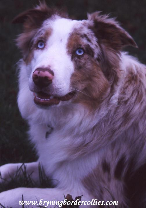 blue eyed boy...about 12 months old
