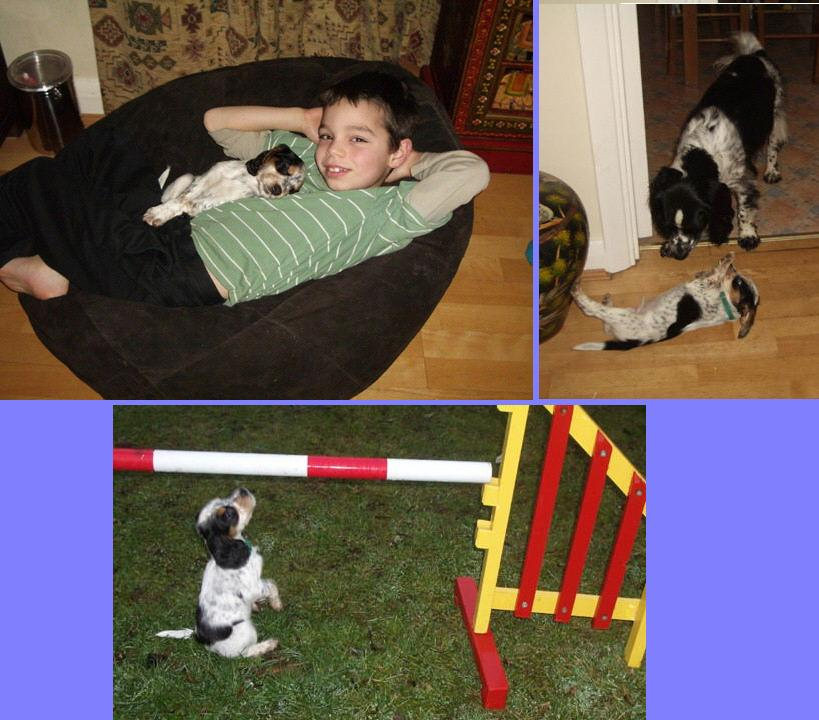 Magic with his two new best friends, Jordan and Rupert and his first introduction to agility!