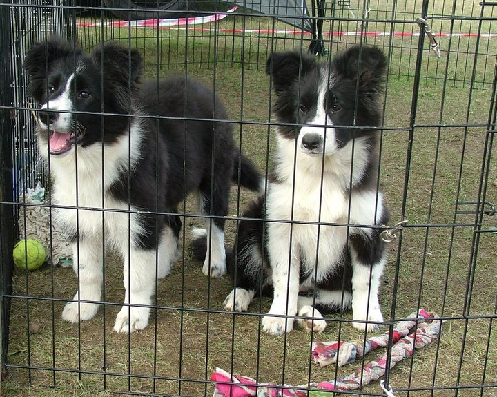 with her sister camping at a flyball tournie