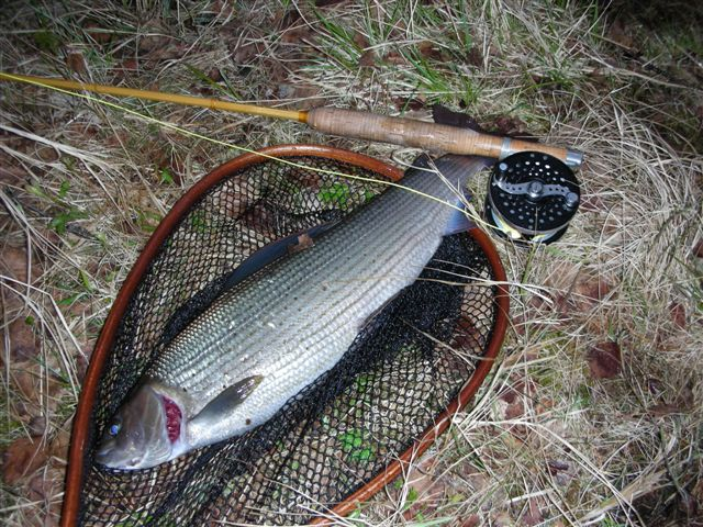 2lb Grayling to TKM on the 206