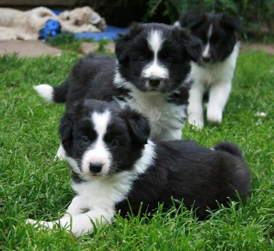 6,7 & 4 b/w pups