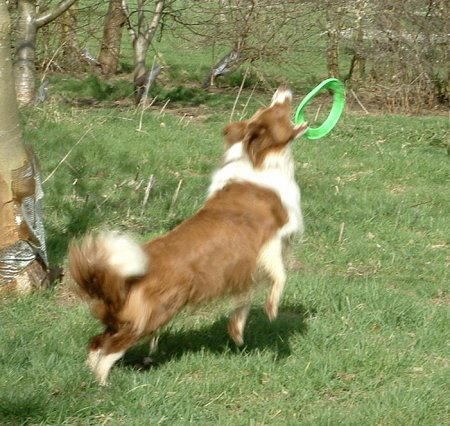 Still throwing and catching toys for herself aged 10.