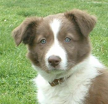 puppy Demi